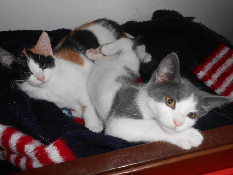 Baby Xena & Tyson